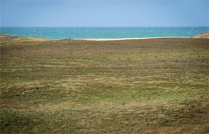 Champignons des dunes
