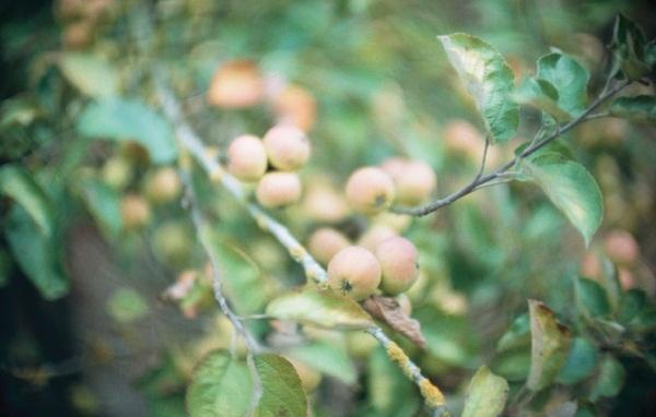 L'automne retrouvé des croqueurs de pommes