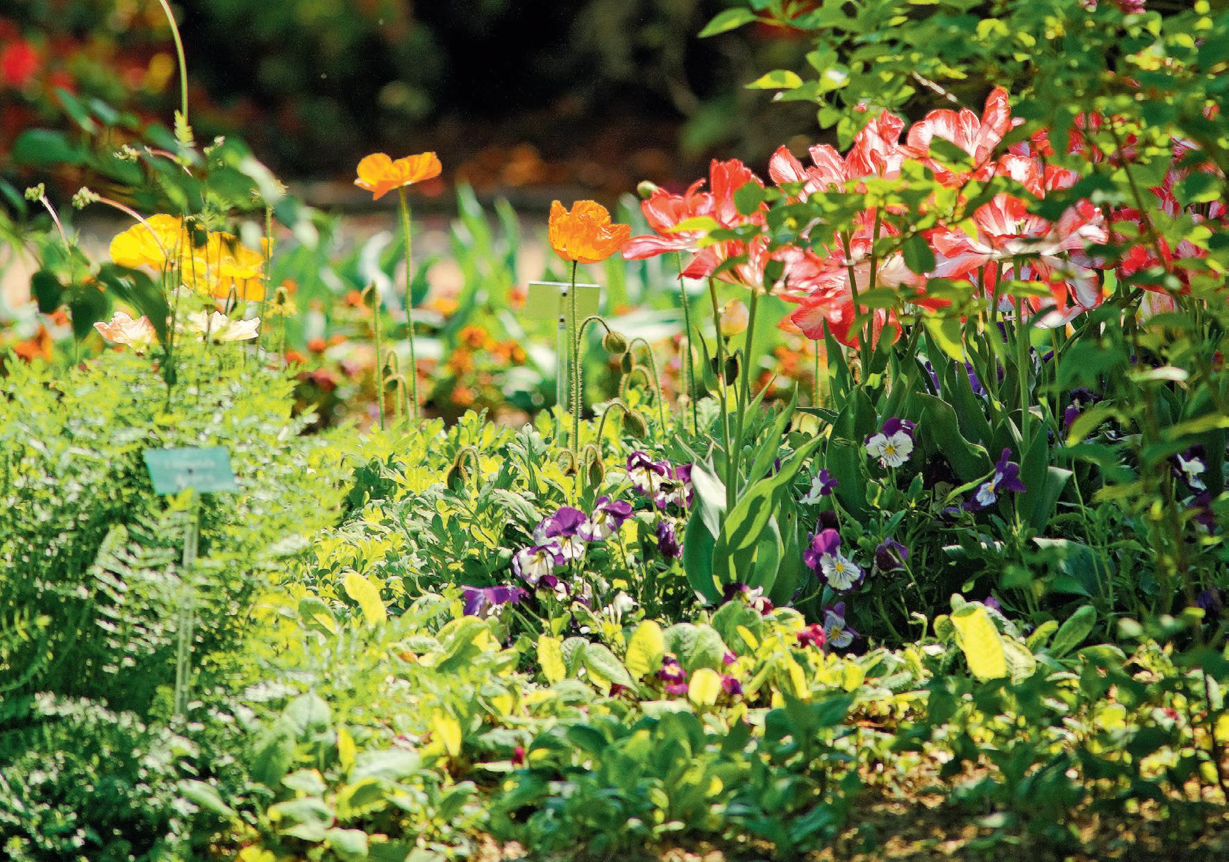 ÉDITO – En pleine germination