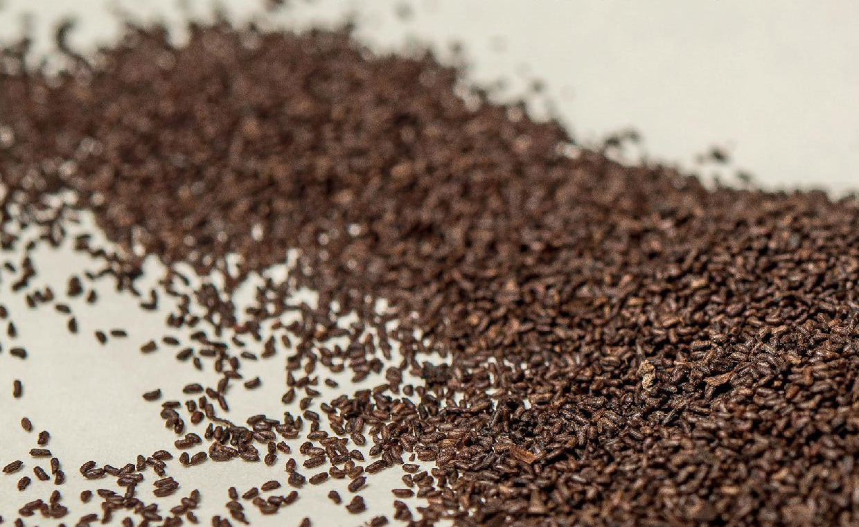 Les graines vagabondes du Thabor