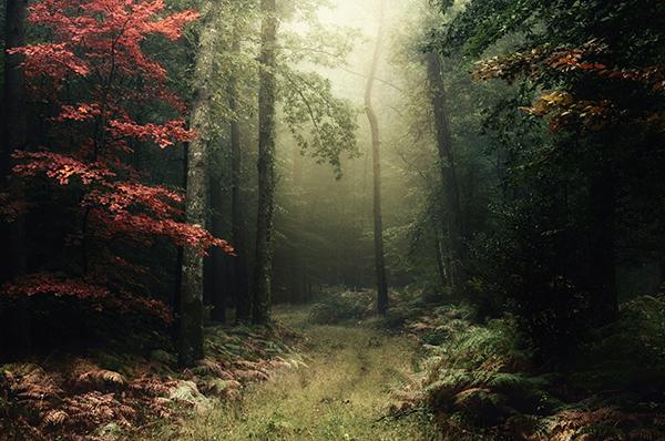 ÉDITO – La Bretagne plante des arbres