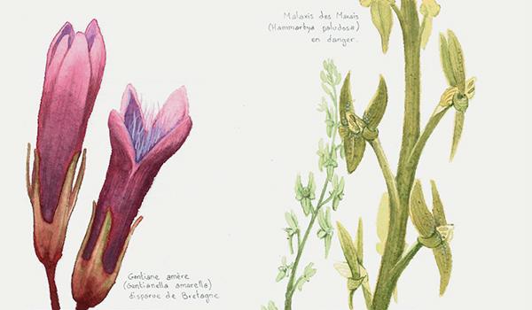 Les plantes menacées sur liste rouge