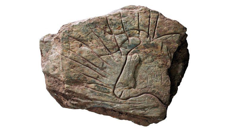 Des oeuvres d'art du paléolithique en rade de Brest