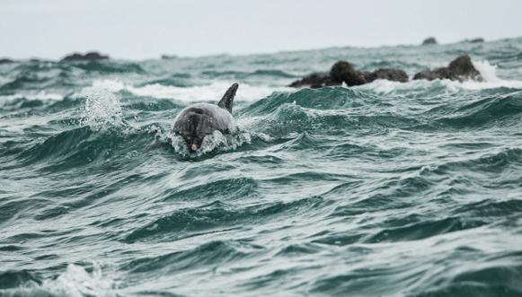 Dauphins, baleines et phoques de Bretagne