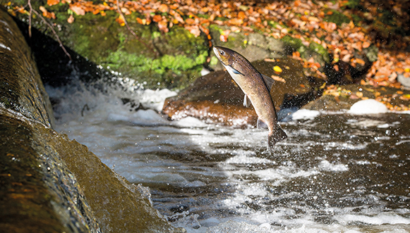 Au fil du Léguer, rivière sauvage
