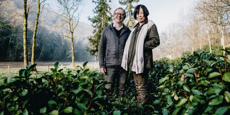Climat et terre favorables, la culture du thé se développe en Bretagne